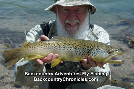 20 inch Utah Brown Trout