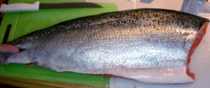 chinook salmon oregon fishing