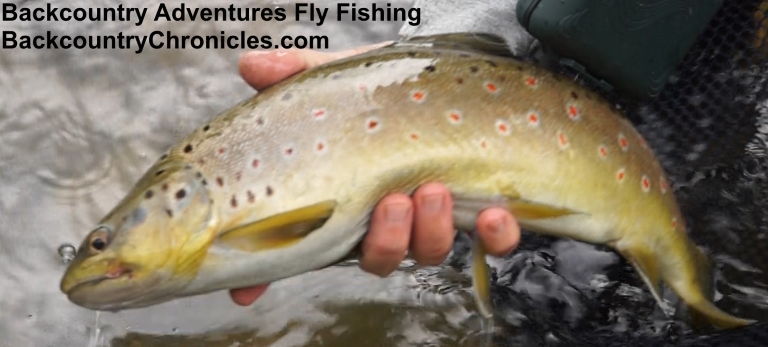 Provo river and surrounding area fishing report august 8 for Provo river fishing report