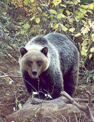 bear spray deterrent