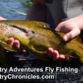 Provo River Fishing Report and Outlook for Late July