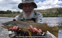 big utah brown trout