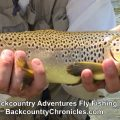 Provo River Fishing Report for Mid July