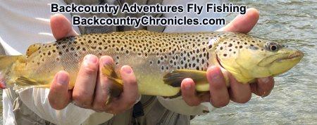 big utah brown trout