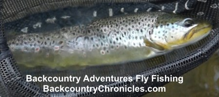 brown trout provo river utah mar 2018