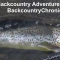 Provo River Fishing Report and Outlook Mid April