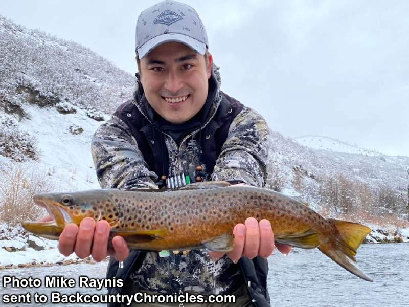 brown trout provo river