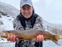 brown trout provo river