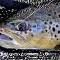 Provo River Fishing Report Late April – Early May