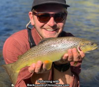 provo river brown torut