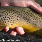 Provo River Fishing Report <br/>Nov 27, 2017