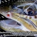 Tips for Hooking and Playing Big Fish on a Fly Rod