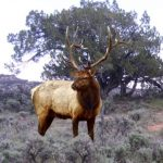 Top 25 Idaho General Elk Archery Hunt Units for 2018