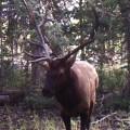 DIY Western Elk Hunt for $1,000 Budget in 2017