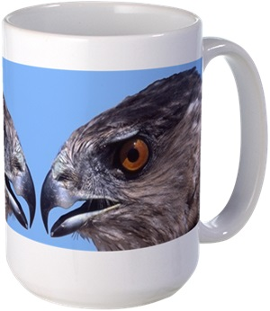image of adult cooper's hawk on coffee cup
