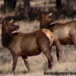 Six Western States have Over-the-Counter Elk Tags for Non-residents in 2017