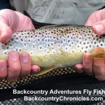 provo river brown trout guided fishing trip