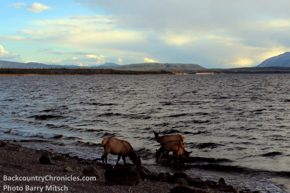 Diy Elk Hunting Choosing A State And