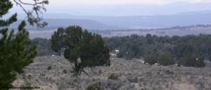 elk in sage and pj habitat