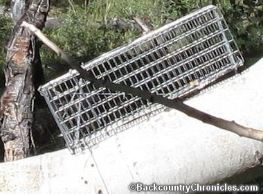 live animal trap