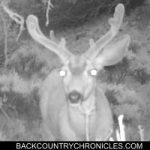 mule deer buck taken with moultrie trail cam