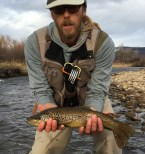 nice provo river brown trout
