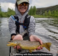 provo river brown trout