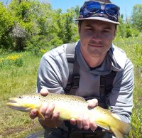 provo river browh trout fly fishing with backcountrychronicles.com