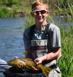 provo river brown trout backcountrychronicles.com