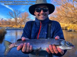 big provo river mountain white fish with backcountry adventures fly fishing