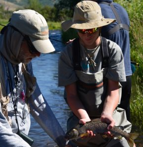 provo river mountain whitefish backcountrychronicles.com