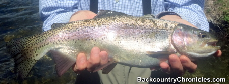 rainbow trout provo river