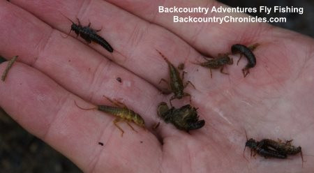 stoneflies, green drakes, mayflies and caddis nymphs