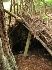 survival rule threes shelter