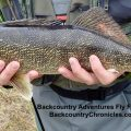 Provo River Fishing Report and Outlook Mid – Late April