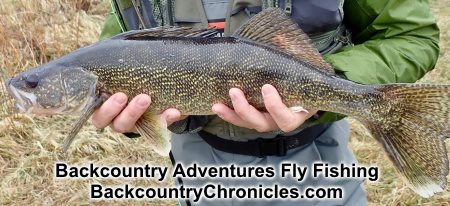 walleye provo river april 18 (click photo for larger image)