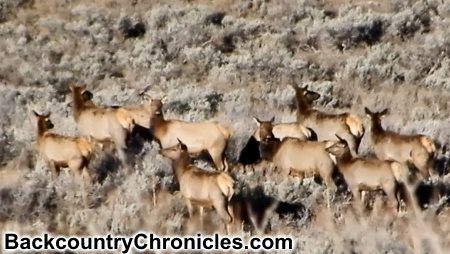 wary elk herd during 2018 hunt season